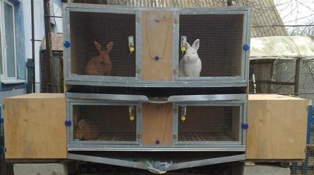Разведение и содержание кроликов дома