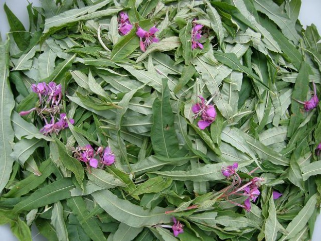 листья и цветки иван-чая, заготовка и ферментация
