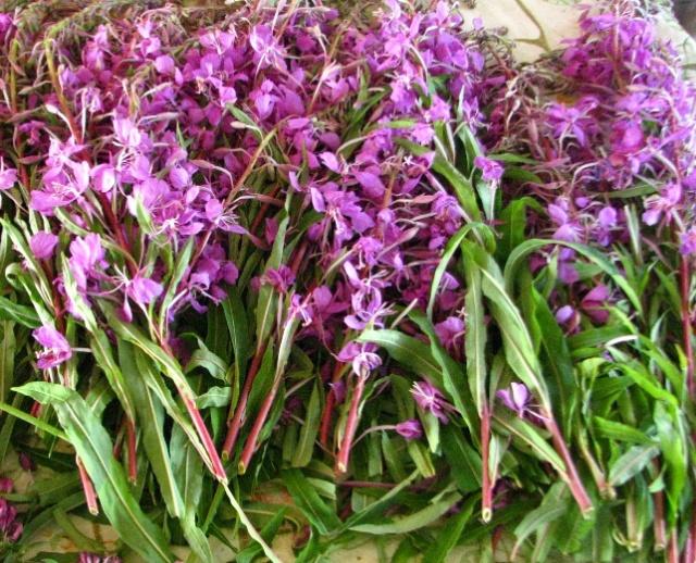 сборка кипрея, листья и цветки кипрея